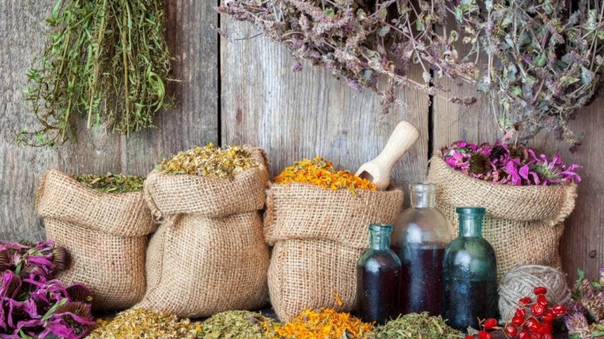 Plantele – o adevarata sursa de inspiratie pentru o afacere de succes